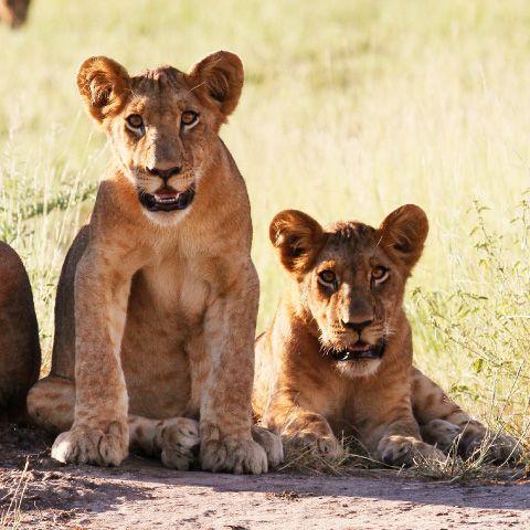 Safaris & Excursões